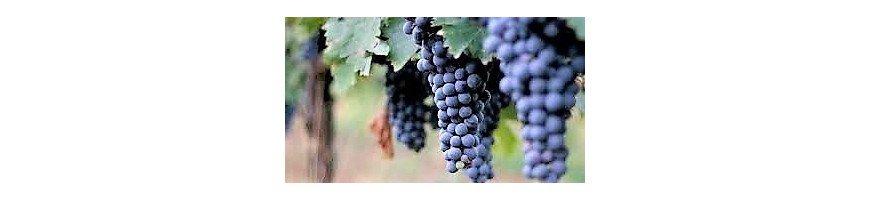 Vins rouges de la région des Marches - Achetez vos vins en ligne
