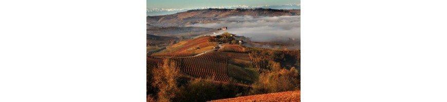 Vins rouges du Piémont - Achetez et Vendez vos vins