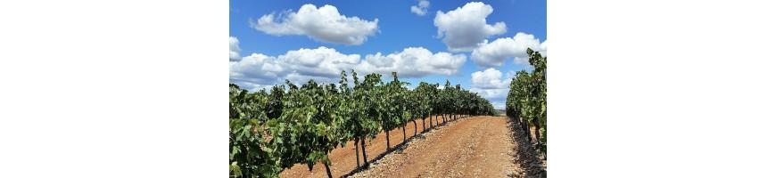 achetez achat acahete vins vin rouge rouges Chili