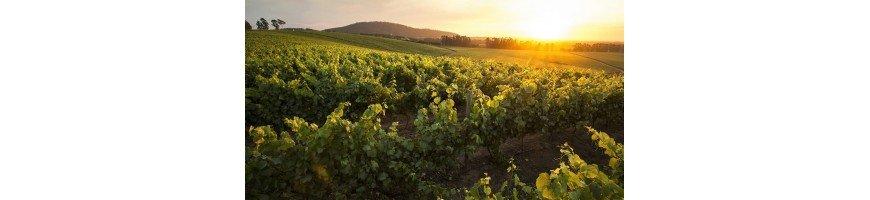 vins vin chilienLa Vallée di Maipo