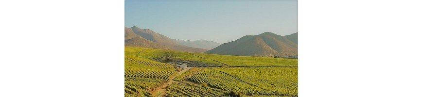 vin chilie vins chilie La vallée de Curico